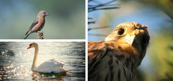 Birds in Guernsey