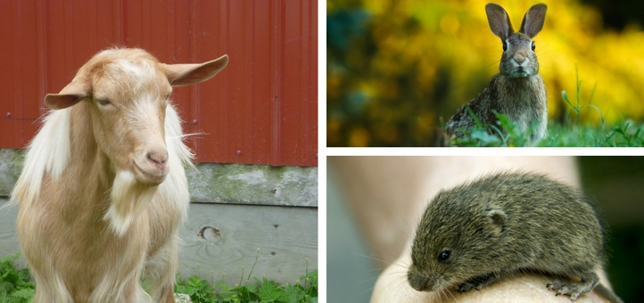 Mammals in Guernsey
