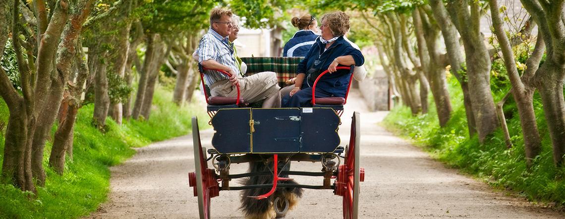 sark horse cart